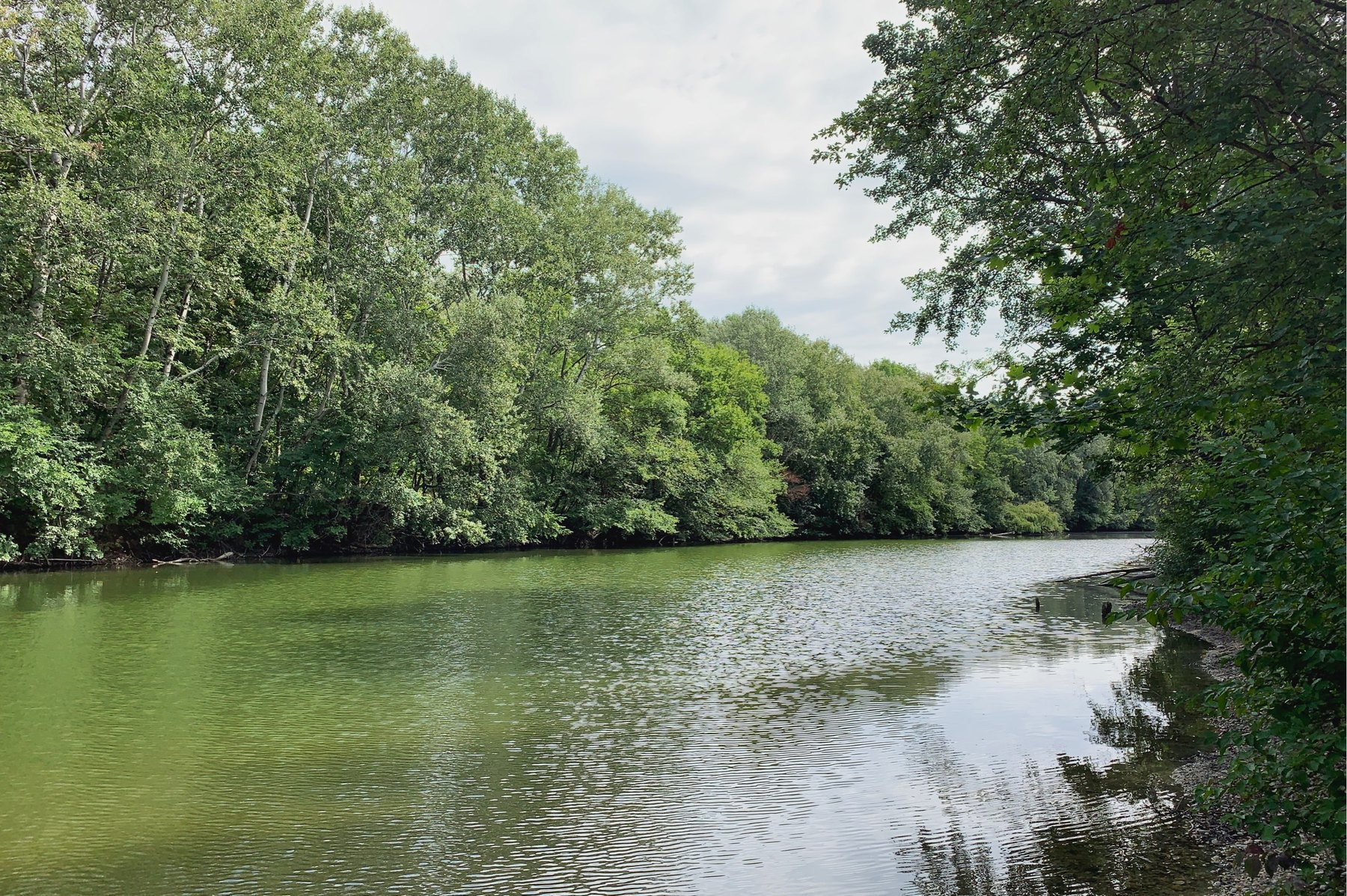 Small lake with trees at the edge of the water